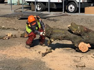 Chainsaw Safety Training